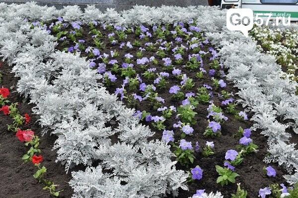 В Орле высадят около 35 тысяч цветов, фото-2