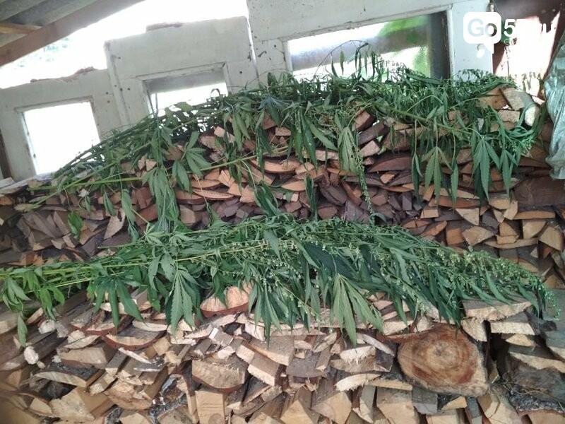 В Орловской области возбуждено дело против любителя выращивать марихуану, - ФОТО, фото-4