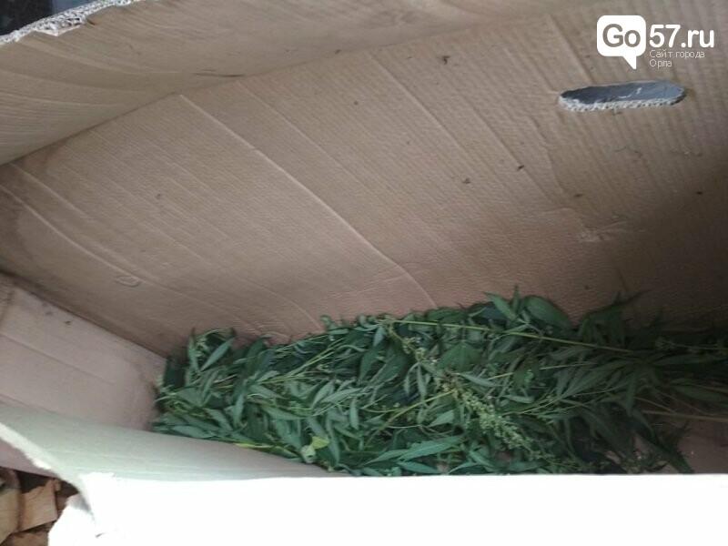 В Орловской области возбуждено дело против любителя выращивать марихуану, - ФОТО, фото-2